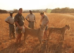 Animal Planet to air new series Lodging with Lions