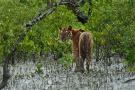 Discovery India and WWF India come together to build a sustainable future for Sundarbans