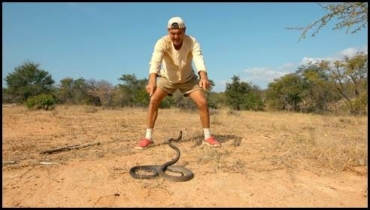 Discovery Channel to premiere Wild Frank-Black Mamba